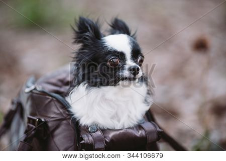 Pet Travel Carrier. Pet Carrier For Small Dog. Dog Carry Bag. Chihuahua And Pet Carry Case. Transpor