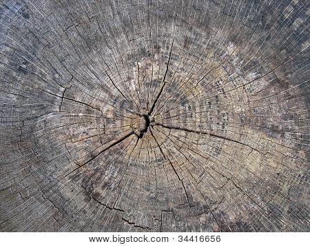 Old Cracked Tree Stump Wood Texture Background