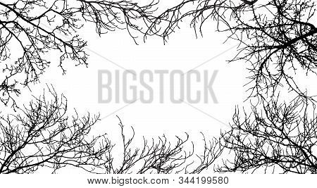 Frame From Branches Tree, Silhouette Of Branches Different Trees. Vector Illustration. Applied Clipp