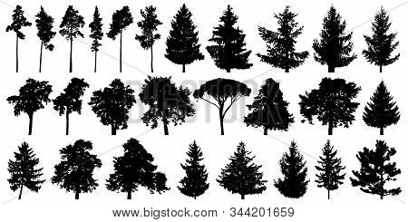 Trees Set Isolated On White Background. Forest Background, Nature, Landscape. Evergreen Coniferous T