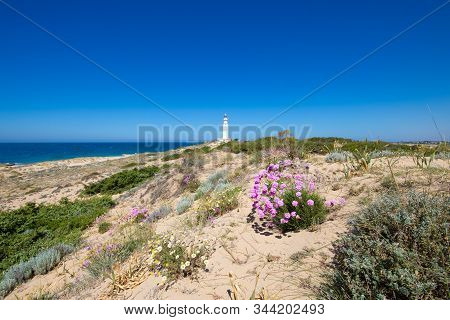 Flowers Plants And Ocean Around Of Lighthouse In Trafalgar Cape