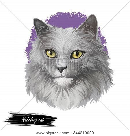 Nebelung Cat Longhaired Russian Blue Breed Isolated On White Background. Digital Art Illustration Of