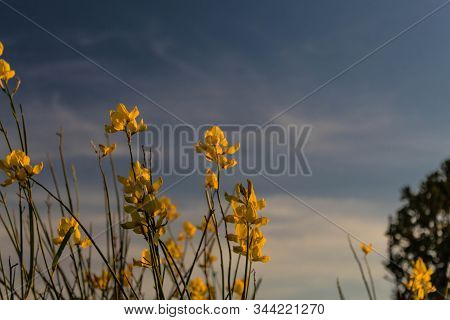 Yellow Flowers And Clouds In The Sky.