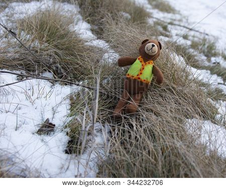 Forgotten, Lost Toy Brawn Teddy Bear Outdoors In Winter.