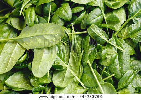 Fresh Raw Organic Uncooked Spinach With Water Drops For Sale At Farmers Market Or Shop. Vegan Food A