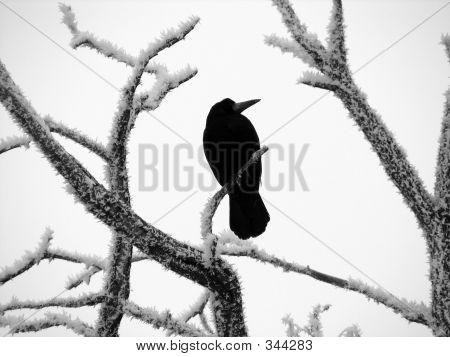 black raven poster