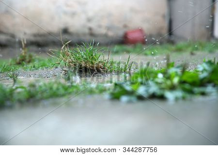 Water Drops On The Green Grass Background With Reflection In The Water . Large Rain Drops Fall To Th