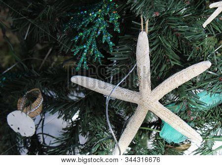 Starfish Ornament Decoration On Christmas Tree Branch