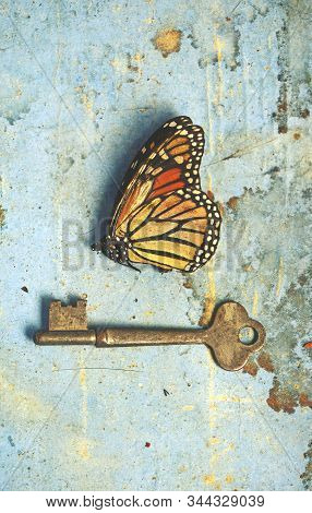 Vintage Still Life Scene Of A Dead Butterfly And Old Key On Rustic Aged Stained Blue Paper And Wood