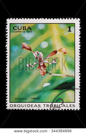 Novosibirsk, Russia - January 07, 2020: Stamp Wild Flowers Collection Printed In Cuba  Shows Pink Fl