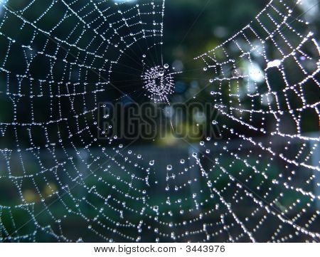 Spider Web With Dewdrops