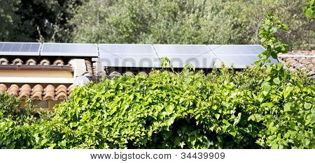 Ivy And Phovotoltaic Panels