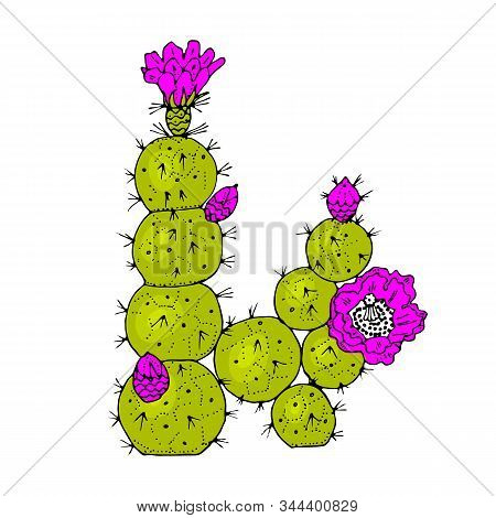 Home Cactus Plants Or Flower. Cozy Cute Element. Exotic Or Tropical Succulent With Prickles. Engrave