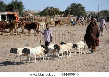 Hargeisa, Somalia - January 8, 2010:cattle Market In Hargeisa. A City In Somalia, The Unrecognized S
