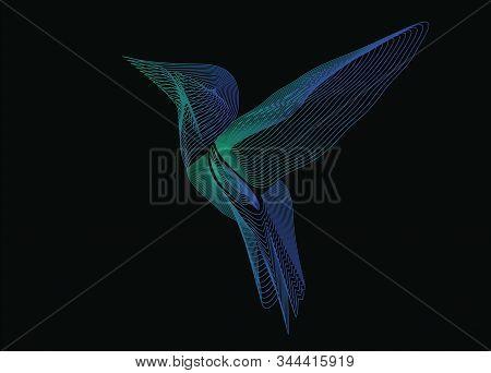 Vector Graphics. Bird Hummingbird. Line Art. Gradient