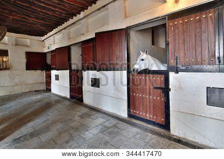 Thoroughbred Horses In Waqif Souq Market In Doha, Qatar