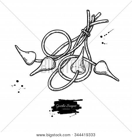 Garlic Scapes Hand Drawn Vector Illustration. Isolated Bunch Sketch.