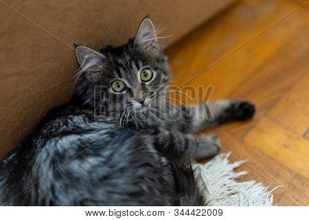 Cat Carefully Looks Wide Open Eyes.cat Carefully Looks Wide Open Eyes