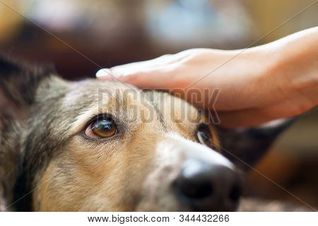 Stroking The Dog Hand Girl Close-up. Pet, Love For Animals