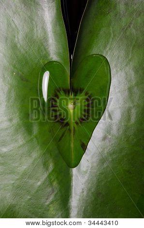 Water Drop Heart Shape