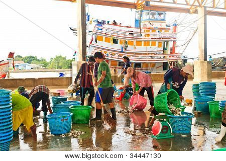 Fishermen Sorting Fishes In Harbor, South Of Thailand