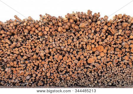 Eucalyptus Wood Or Wood Log For Construction Buildings Background And Texture