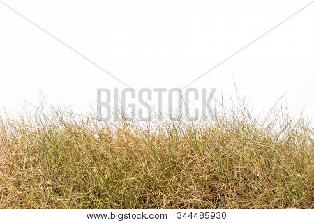 Dry Brown Garden Grass Studio Shot And Isolated On White