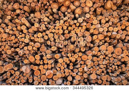 Stacked Of Eucalyptus Wood Or Wood Log For Construction Buildings Background And Texture