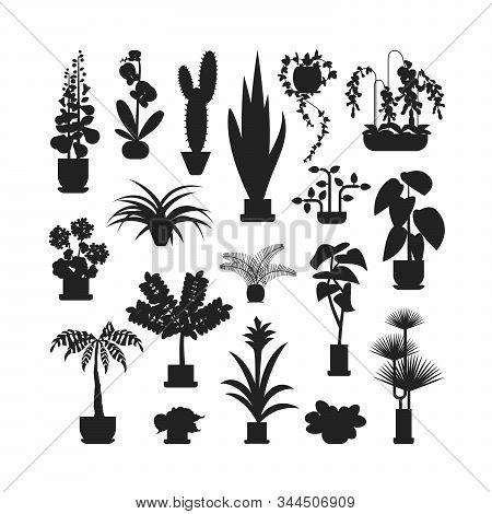 Set Of Home Plants Silhouette For Floriculture, Floristry. Collection Of Different Flowers In Flower