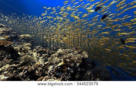 Dramtic Underwater Photo Of School Of Fish (yellow Snappers). From A Scuba Dive Around Phi Phi Islan