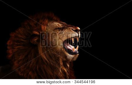 Profile Of The Lion On Black Roaring, Show Fangs