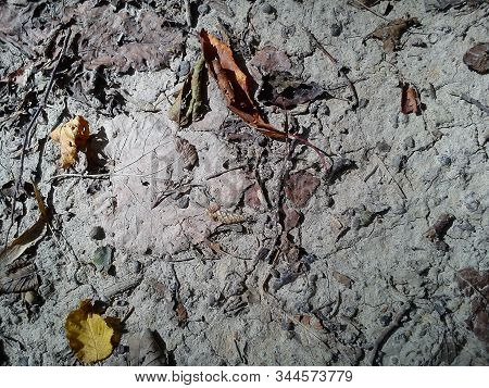 Light Clay Soil. Forest Land. Cracks From Drought On The Soil. Yellow Gray Autumn Fallen Leaves. Tre