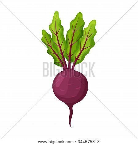Beet Vector Icon.cartoon Vector Icon Isolated On White Background Beet .