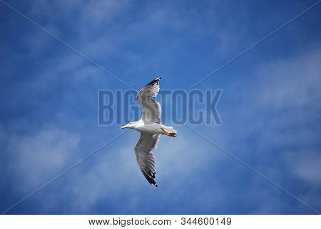 An Flying Seagull In The Blue Sky