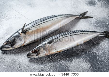 Raw Mackerel Fish. Fresh Seafood. Gray Background. Top View