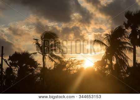 Silhouette Coconut Palm Tree By Dark Back Lit Skylight Sun Sunlight Sunset. Dramatic Atmospheric Moo