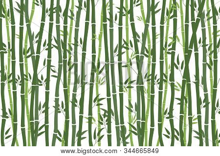 Abstract Background - Bamboo Forest. Green Drawing Of Bamboo Stalks On A White Background. Plant Tex
