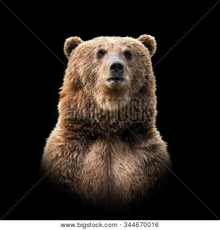 Close Up Bear Portrait Isolated On Dark Background