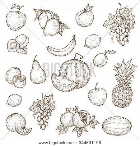 Farm, Garden And Tropical Fruits Vector Sketches. Isolated Ripe Apple, Banana, Pomegranate Or Garnet