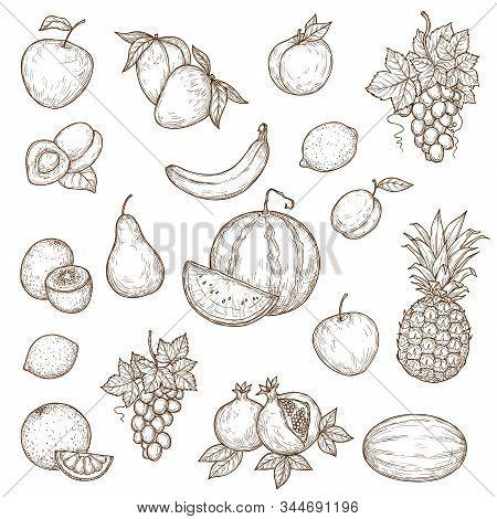 Farm, Garden And Tropical Fruits Vector Sketches. Isolated Ripe Apple, Banana, Pomegranate Or Garnet