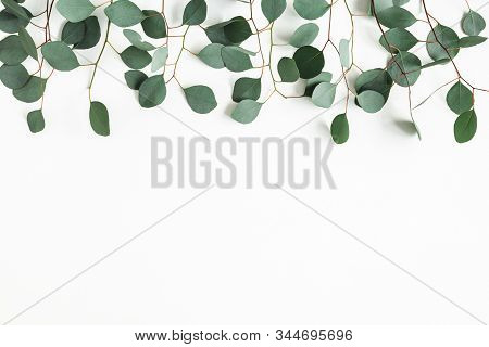 Eucalyptus Leaves On White Background. Border Made Of Eucalyptus Branches. Flat Lay, Top View, Copy