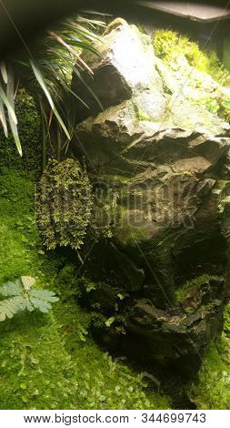 A Beautiful Frog Hid Near A Stone And Basks