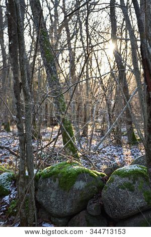 Old Mossy Stone Wall In A Deciduous Forest With The First Snow In The Season