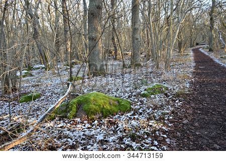 The First Snow By A Winding Footpath In A Deciduous Forest