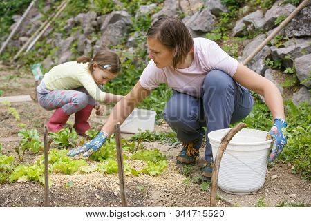 Mother And Daughter Working Together In The Vegetable Garden. Quality Time, Mother-daughter Relation