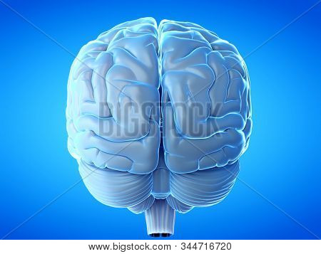 3d rendered medical illustration of a human brain