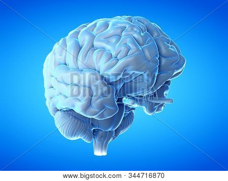 3d rendered medical illustration of a human brain