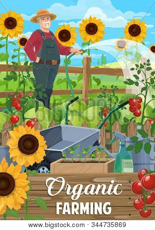 Farming Vector Poster, Agriculture Industry. Farmer At Garden Watering Tomato Plants, Cabbage And Su
