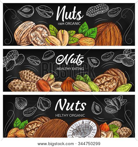 Vector Nut, Legume And Seed Chalkboard Black Banners. Cashew, Almond And Pistachio, Walnut, Peanut,