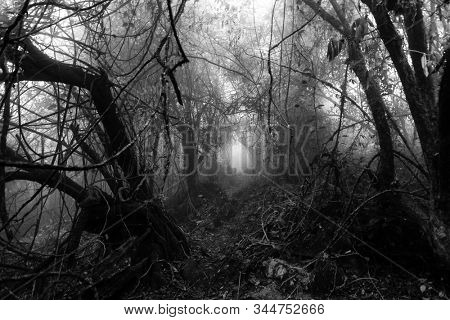Gloomy natural tunnel in a foggy tropical forest, black and white edition